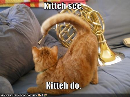 uh43048,1276091560,funny-pictures-cat-imitates-musical-instrument