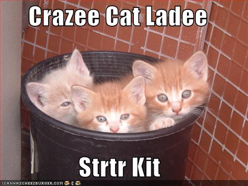 uh43048,1276596439,funny-pictures-crazy-cat-lady-starter-kit