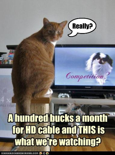 uh43048,1276776754,funny-pictures-cat-hates-what-is-on-tv