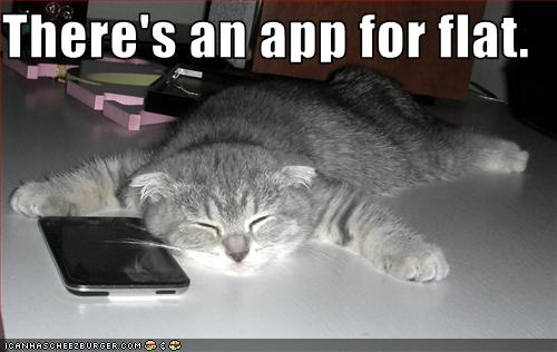 uh43048,1276776818,funny-pictures-cat-has-an-iphone