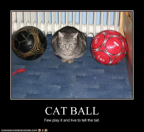 uh43048,1276777098,funny-pictures-cat-is-between-balls