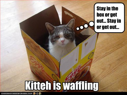 uh43048,1277379691,funny-pictures-cat-is-waffling