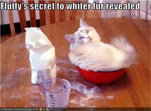 uh43048,1277379804,funny-pictures-cat-has-white-fur1