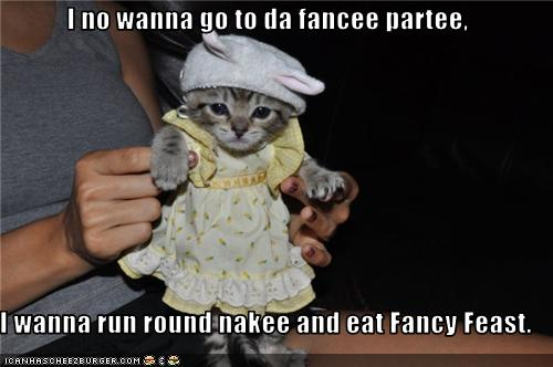 uh43048,1277379869,funny-pictures-kitten-does-not-want-to-go-to-party