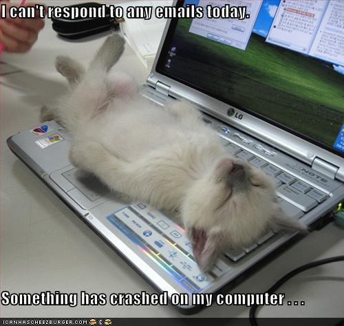 uh43048,1277379932,funny-pictures-kitten-crashed-laptop