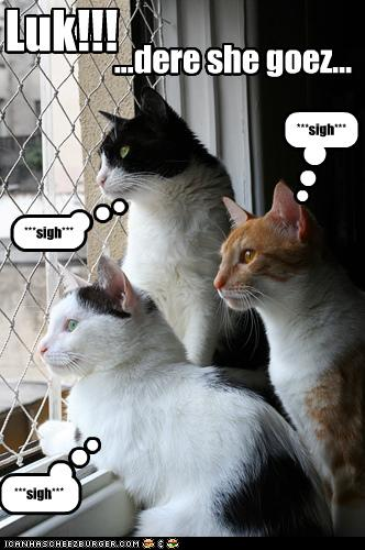 uh43048,1277795801,funny-pictures-cats-look-out-window