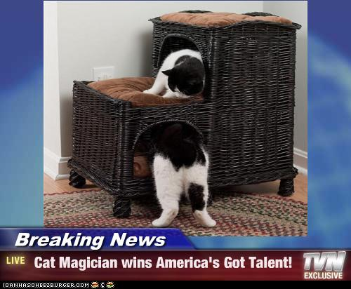 uh43048,1277795817,funny-pictures-cat-is-a-magician