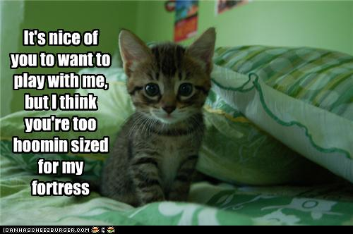 uh43048,1277795834,funny-pictures-kitten-has-fortress