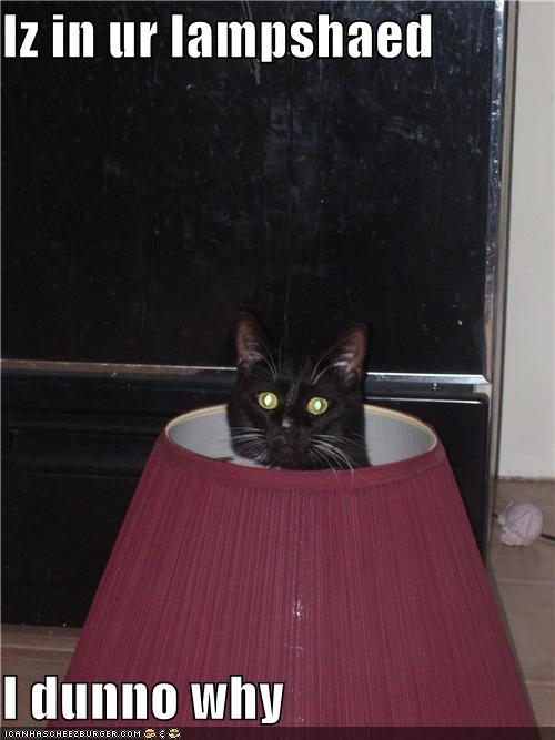 uh43048,1277795848,funny-pictures-cat-is-in-lampshade
