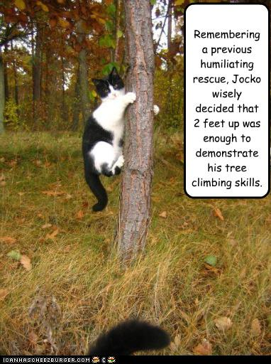 uh43048,1277795913,funny-pictures-cat-climbs-tree