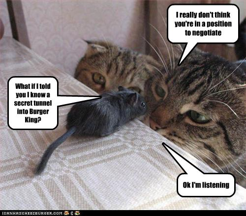 uh43048,1277795929,funny-pictures-cats-and-mouse-negotiate