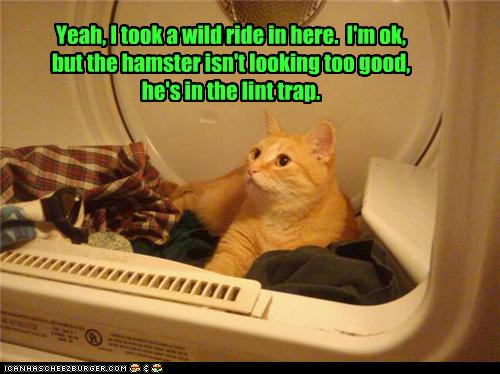 uh43048,1277795990,funny-pictures-cat-took-ride-in-washing-machine