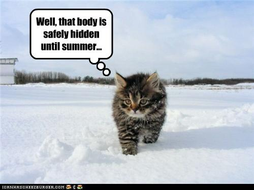 uh43048,1277796144,funny-pictures-kitten-hid-a-body