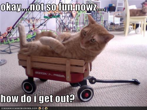 uh43048,1277967783,funny-pictures-cat-is-in-wagon