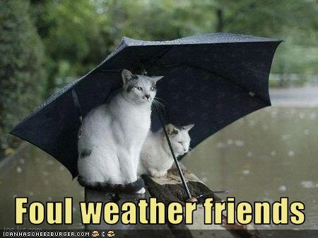 uh43048,1277967793,funny-pictures-cats-in-rain-are-friends