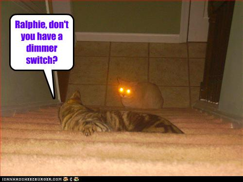 uh43048,1277967830,funny-pictures-cat-wants-lights-to-dim