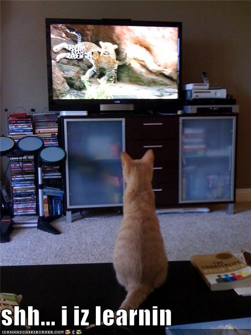 uh43048,1278328976,funny-pictures-cat-learns