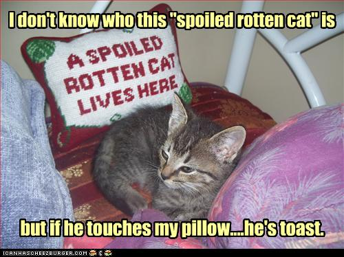 uh43048,1278328986,funny-pictures-kitten-is-spoiled