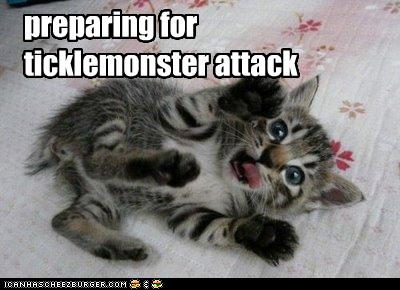 uh43048,1278328996,funny-pictures-kitten-prepares-for-attack