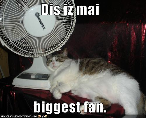 uh43048,1278329034,funny-pictures-cat-has-fan