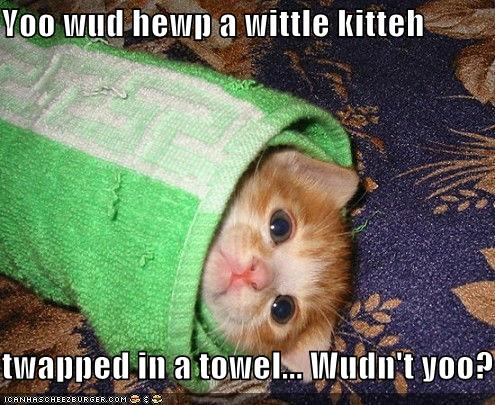 uh43048,1278329097,funny-pictures-kitten-is-wrapped-in-towel