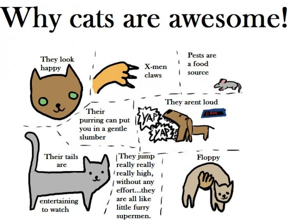 uh43048,1278494610,why-cats-are-awesome-580x442