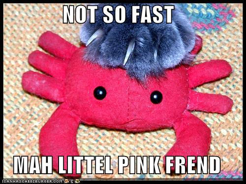 uh43048,1278495476,funny-pictures-cat-grabs-pink-crab-toy
