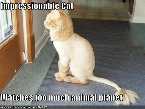 uh43048,1278495676,funny-pictures-shaved-lion-cat-looks-outside