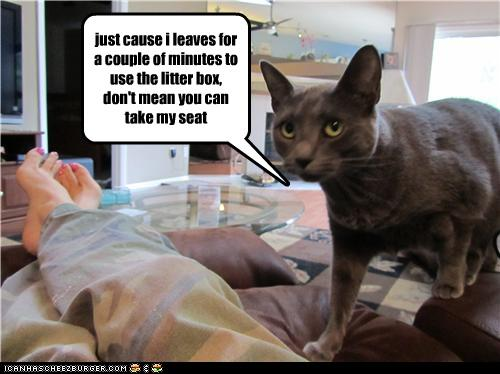 uh43048,1279000742,funny-pictures-cat-claims-his-seat