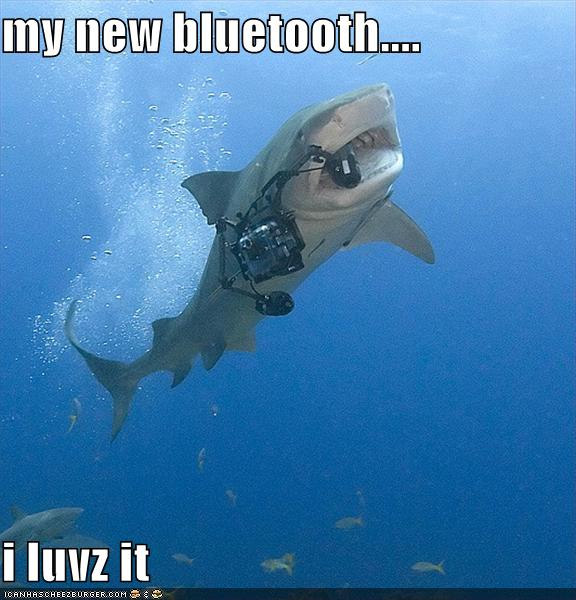 uh43048,1279141854,funny-pictures-shark-bluetooth