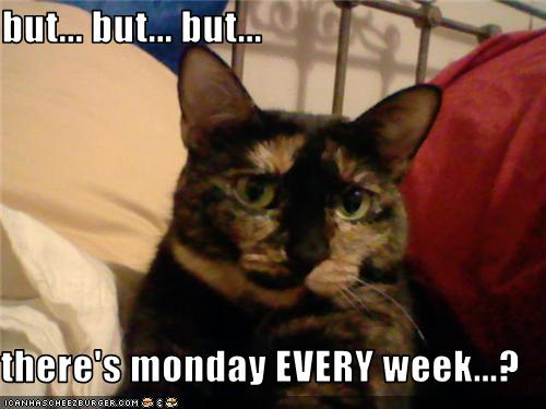 uh43048,1279303183,funny-pictures-cat-hates-monday