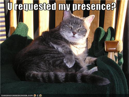 uh43048,1279303213,funny-pictures-disturbed-cat-is-angry