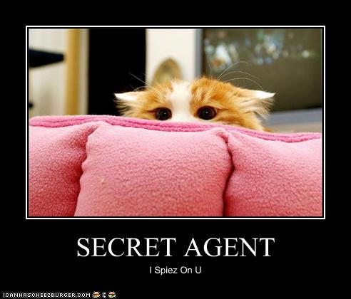uh43048,1280312510,funny-pictures-cat-is-secret-agent
