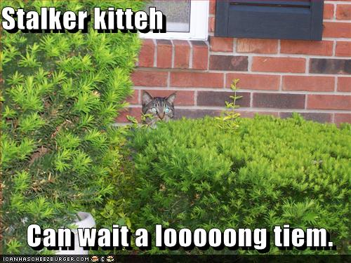 uh43048,1280486141,funny-pictures-stalker-cat-will-wait-for-you