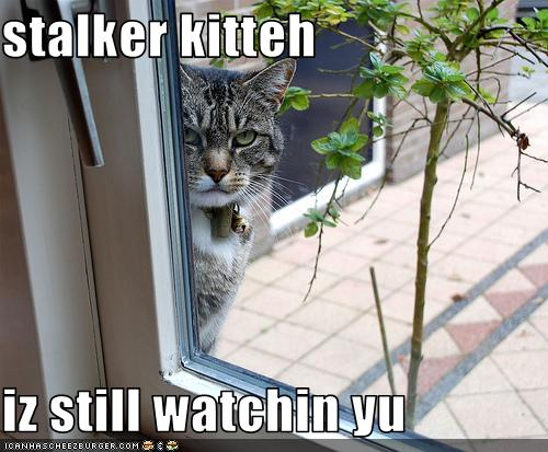 uh43048,1280486170,funny-pictures-stalker-cat-is-watching-you