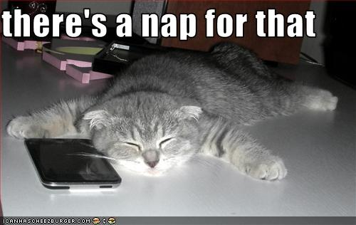 uh43048,1281611741,funny-pictures-cat-has-a-nap
