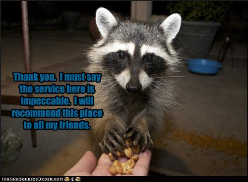uh43048,1281611937,funny-pictures-raccoon-recommends-your-house