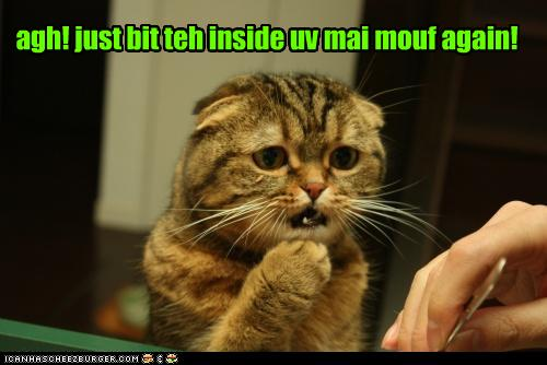 uh43048,1281611952,funny-pictures-cat-bit-mouth