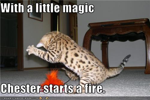 uh43048,1281612073,funny-pictures-cat-starts-fire
