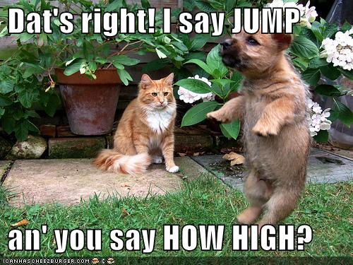 uh43048,1281612245,funny-pictures-cat-tells-dog-to-jump