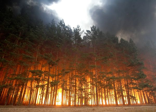 uh43048,1281629119,russia-wildfires-smoke-deaths-trees-burning 24439 600x450