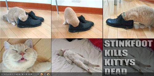 uh43048,1283075239,funny-pictures-cat-smells-your-shoes