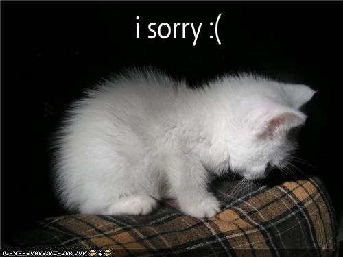uh43048,1284718746,funny-pictures-kitten-is-sorry