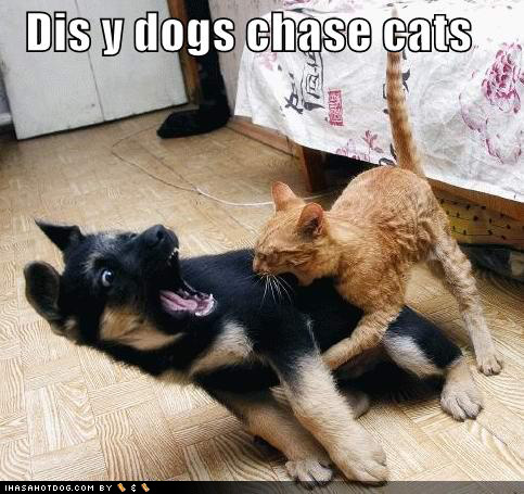 uh43048,1284718911,puppeh-kitteh-dis-y-dogs-chase-cats