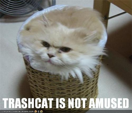 uh43048,1285155789,funny-pictures-cat-is-in-trash