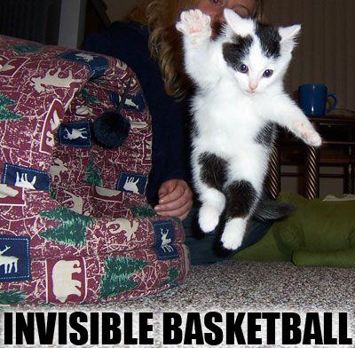 uh43048,1285313132,invisible-basketball-cat