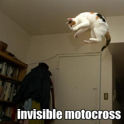 uh43048,1285313132,invisible-motocross-cat