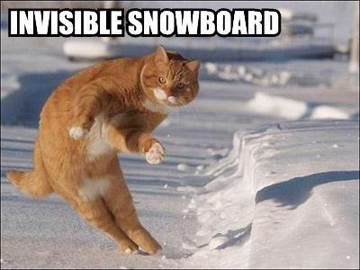 uh43048,1285313132,invisible-snowboard-cat