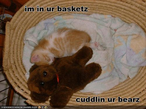 uh43048,1287083333,funny-pictures-cat-is-in-basket