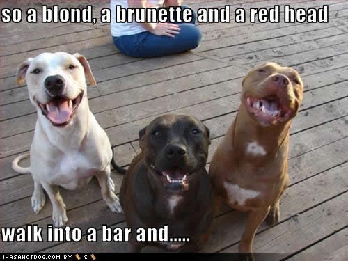 uh43048,1288452356,funny-dog-pictures-walk-bar